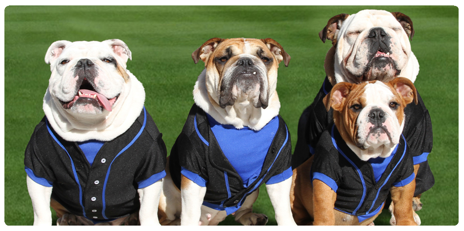 BARK IN THE PARK -- AUGUST 28th