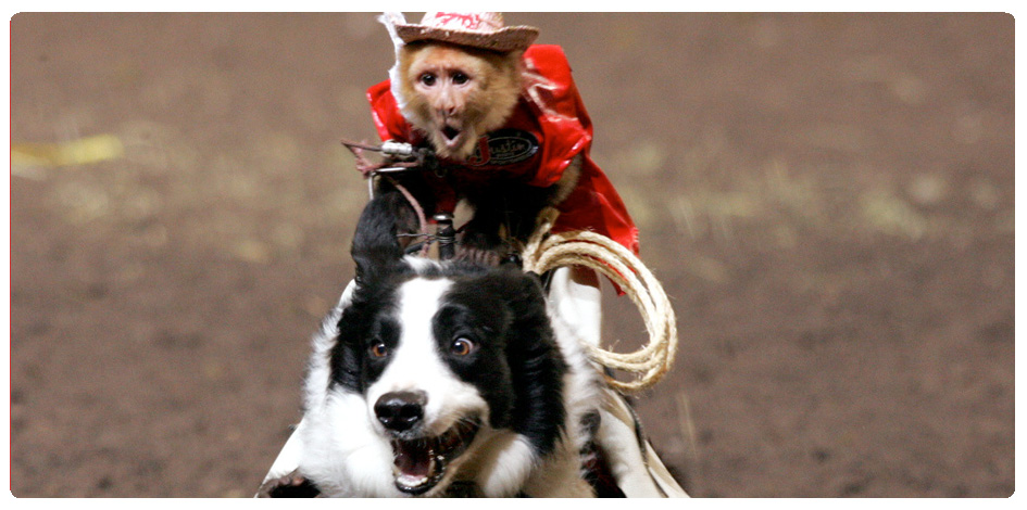 COWBOY MONKEY RODEO - JULY 28th